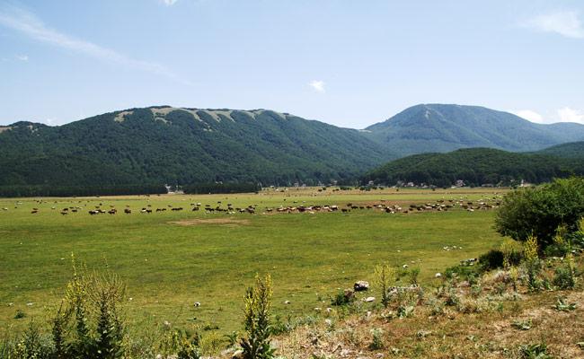 Bagnoli-Irpino-AngeloAndFranco-10